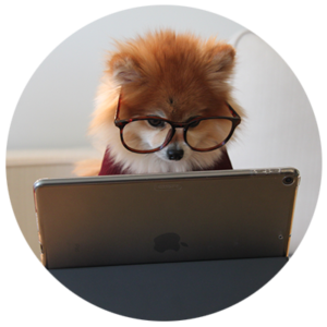 puppy at laptop